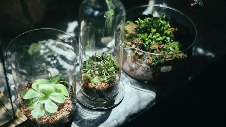 科学の実験に使われていた古いケミカルガラスのテラリウム