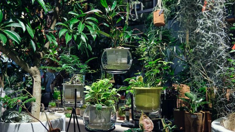 部屋の印象をガラリと変えてくれそうな鉢植えも、大小様々なサイズのものが揃っている