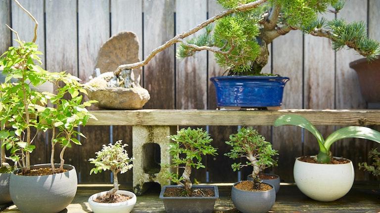 いわゆる「盆栽」というイメージのものからモダンなものまで、一口に盆栽といっても幅が広い