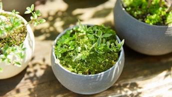 最近人気の苔の盆栽。鉢の中に息づく世界観にうっとり