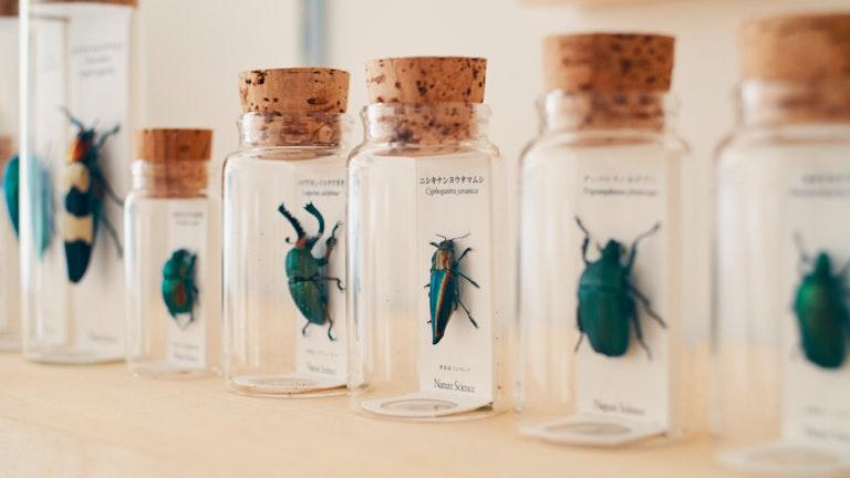 つやつやと虹色に輝く甲虫の標本。ボトルの中で時が止まっているかのように美しい