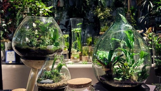 ガラスの中にもう一つの世界がある様な、まるで箱庭の様な寄せ植え