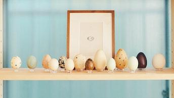 ウサギノネドコにかかれば、様々な動物の卵の殻も立派なインテリアに