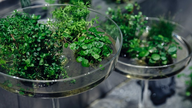 水草やシダの苔玉はお手入れも簡単。入れる器で簡単に印象を変えられるのも魅力