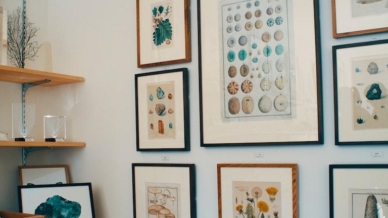 ウニや植物の博物画は東京店ならではの取り扱い。カラーの部分は手彩色による、貴重な1点ものの版画