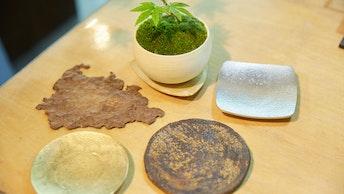 鉢皿を変えればまた違った印象に。インテリアとして楽しむ小物も豊富
