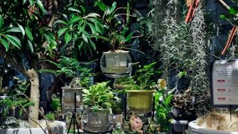 室内で育てやすい様々な観葉植物のほか、エアプランツなども人気