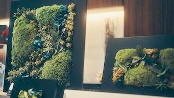 飾るだけでモダンな印象のお部屋に!色鮮やかな苔のプリザーブドフラワー