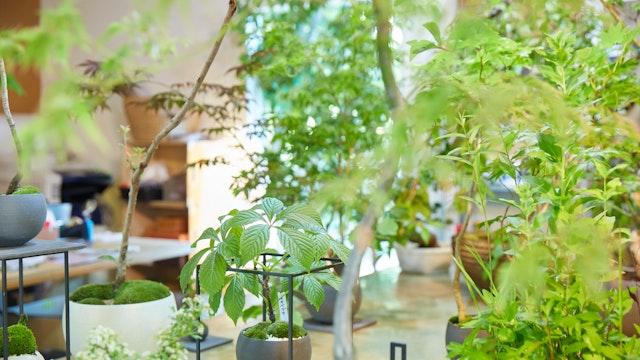 店内には、モダンなものからクラシカルなものまで様々な種類の盆栽が