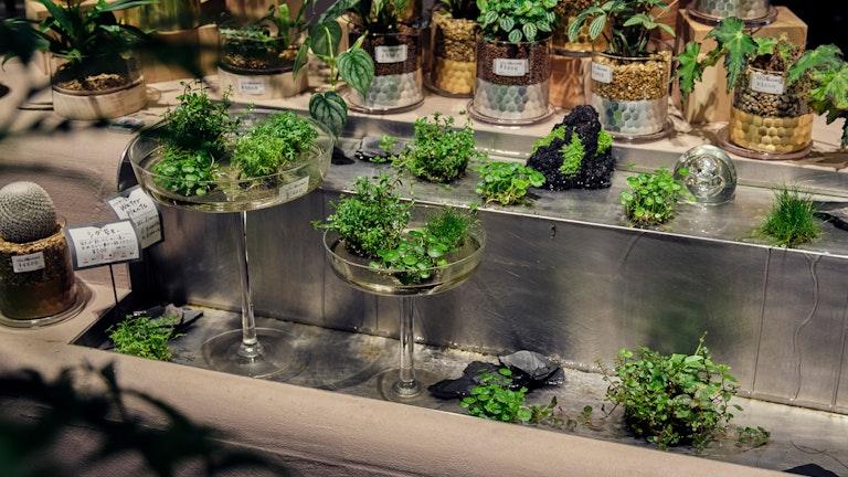 水草やシダの苔玉は手入れも簡単で育てやすい。水が流れる水路のディスプレイは日本橋店ならでは