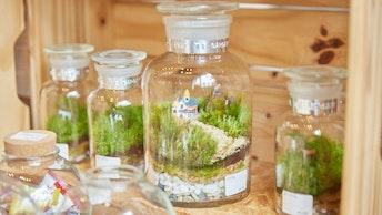 試薬瓶を使用したテラリウム。無機質な素材が植物の緑を引き立てます